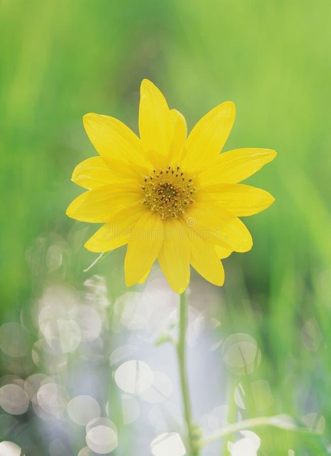 Wild blommor arkivbilder