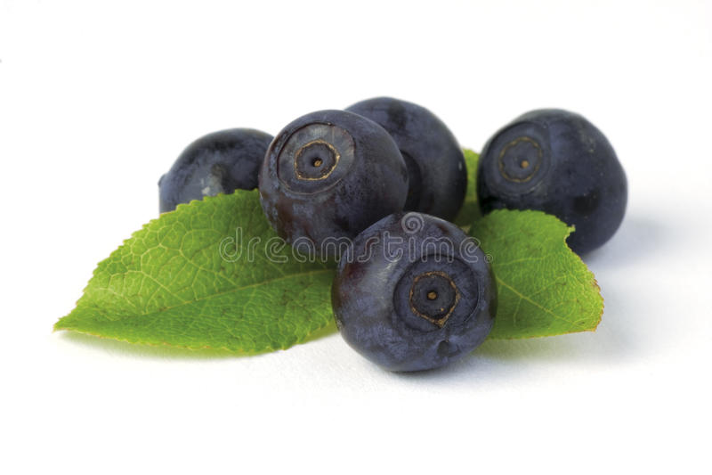 Wild Blueberries On White Stock Photo