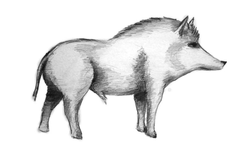 Download Wild Boar Royalty Free Stock Photo - Image: 13119155