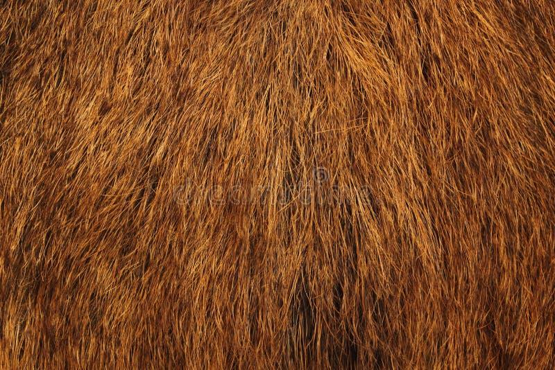 Wild boar fur royalty free stock photos