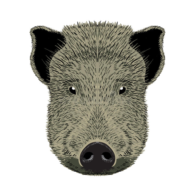 Wild boar illustration royalty free stock images