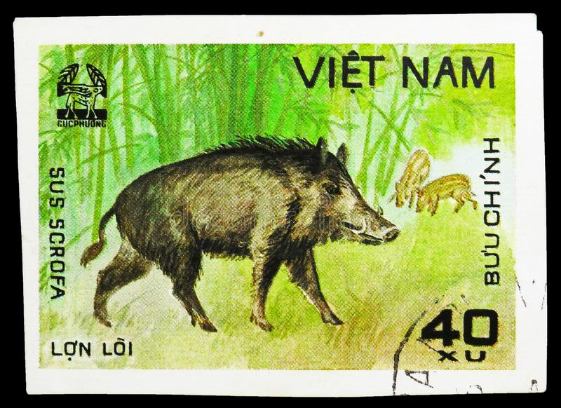 Wild Boar (Sus scrofa), Animals from Cuc Phuona Nati Forest serie, circa 1981. MOSCOW, RUSSIA - SEPTEMBER 26, 2018: A stamp printed in Vietnam shows Wild Boar ( royalty free stock photos