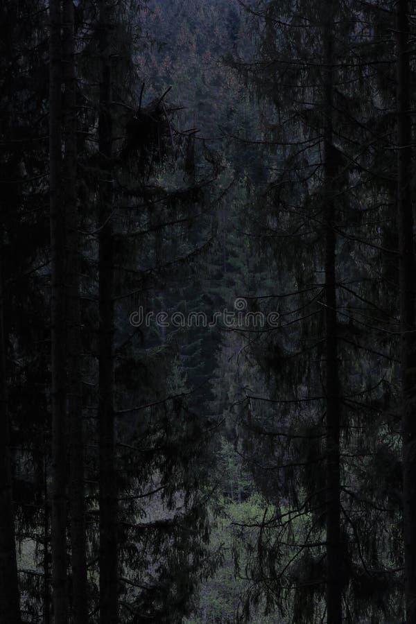 Wild bos in de Slowaakse wildernis royalty-vrije stock afbeeldingen
