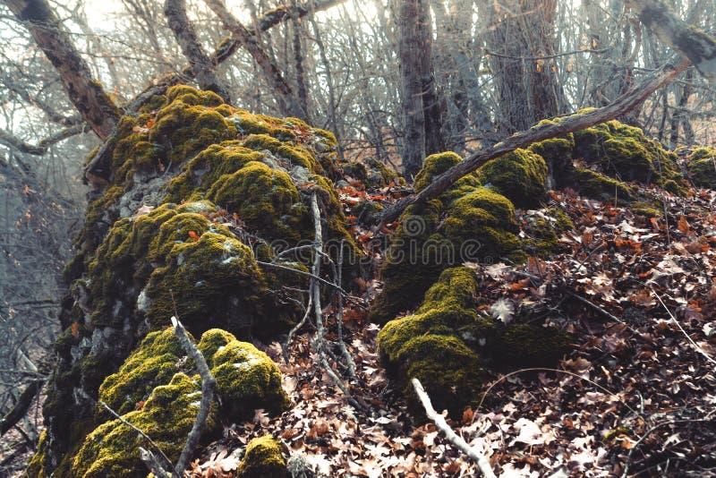 Wild bos stock afbeeldingen
