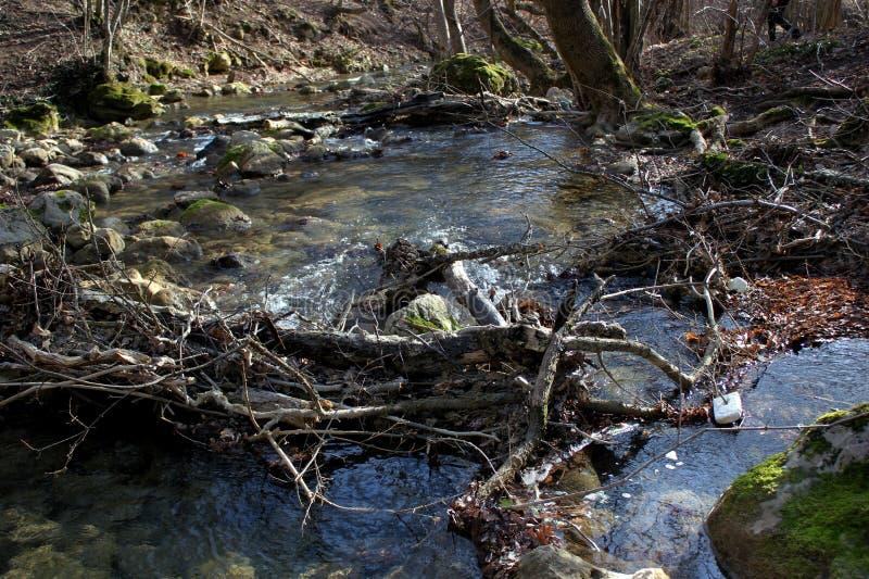 Wild bos, struikgewas en bosmeer en rivier royalty-vrije stock afbeeldingen