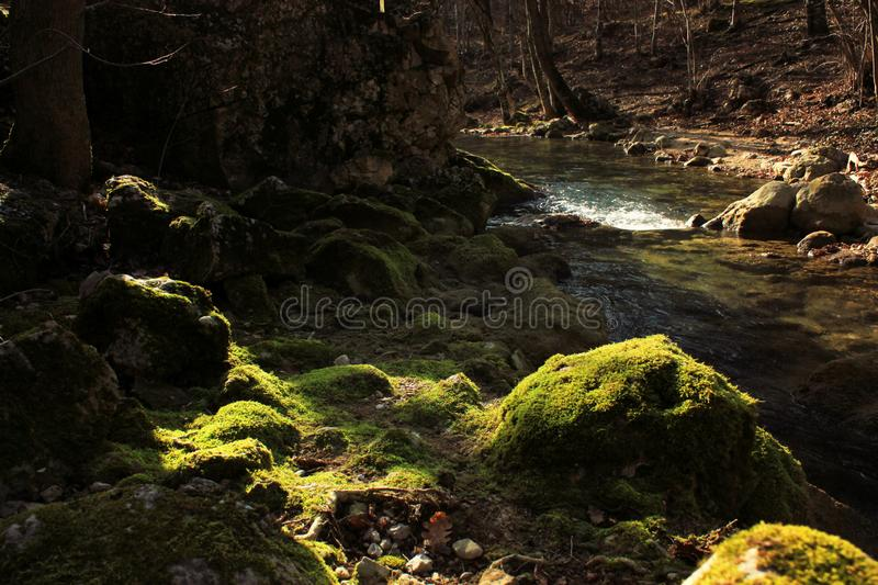 Wild bos, struikgewas en bosmeer en rivier royalty-vrije stock fotografie