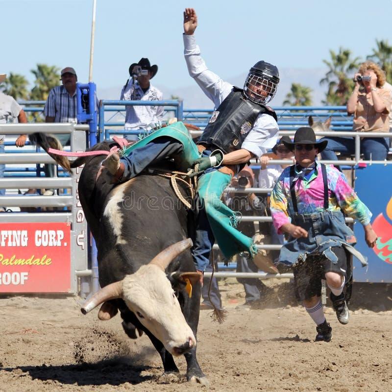 Free Wild Bull Rider Royalty Free Stock Photos - 19225358
