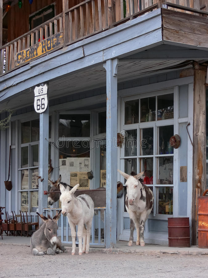 Download Wild Burros Along Route 66 In Oatman Arizona Stock Image - Image of donkey, antiques: 17603599