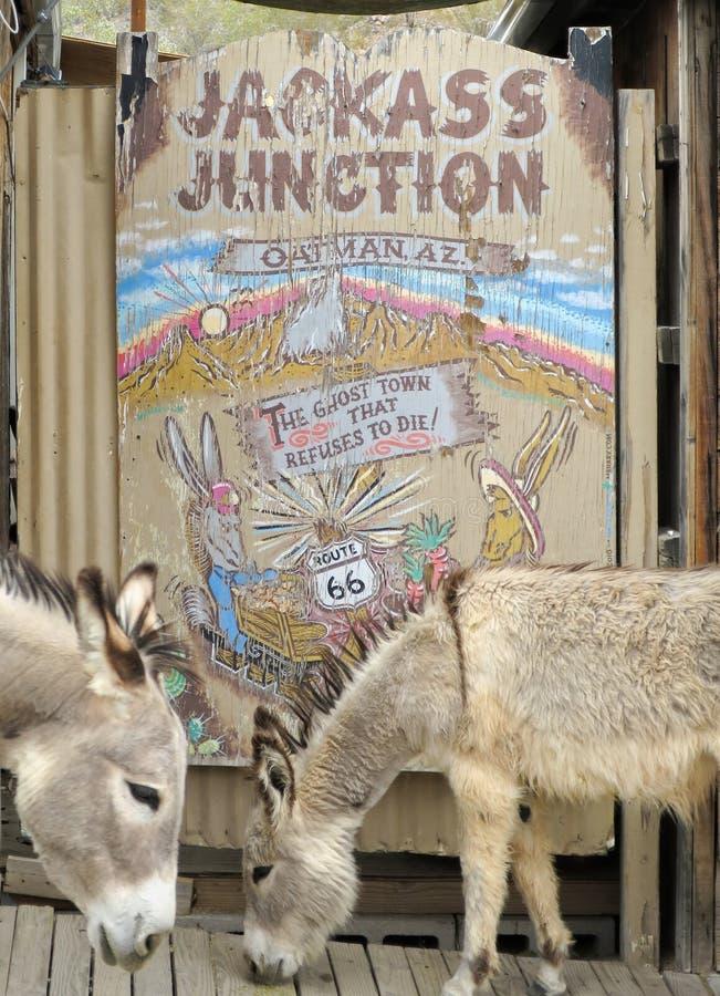 Wild Burros pose at a sign, Oatman, Arizona royalty free stock image