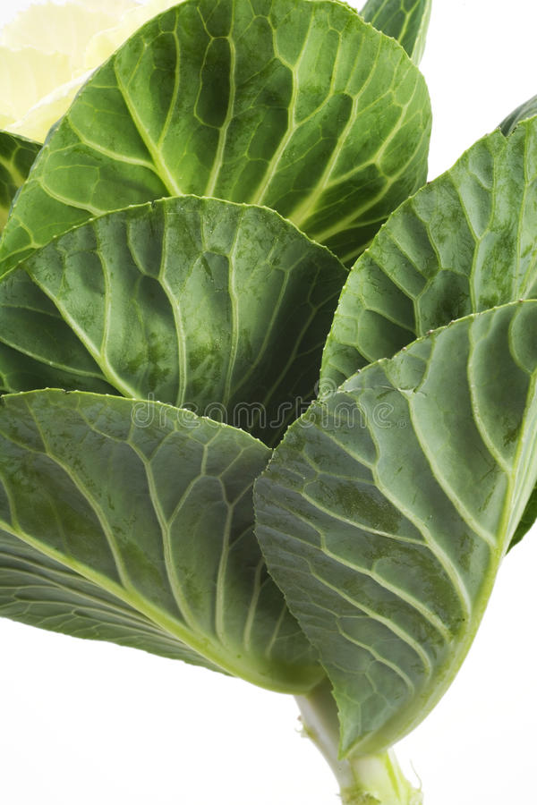 Download Wild cabbage stock image. Image of freshness, sphere - 18154643