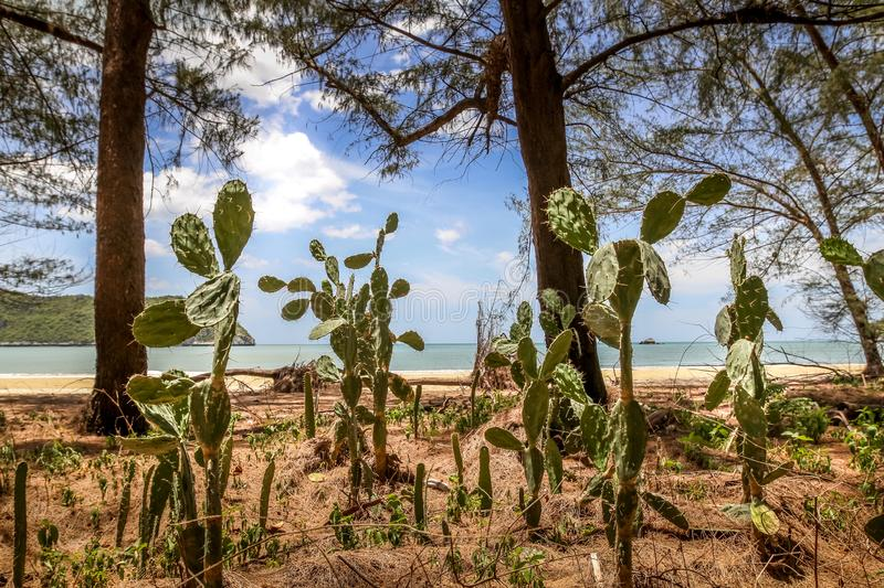 Wild cactus with big thorns beside the beach with sea and blue cloudy sky in the background royalty free stock photo