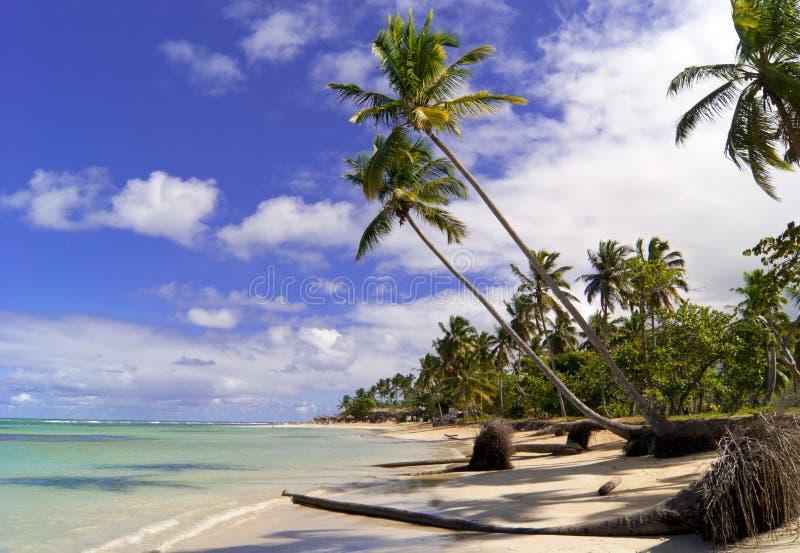 Wild Caraïbisch strand. Samana. stock afbeeldingen