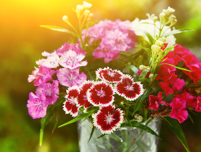 Wild carnation different color bouquet stock photography