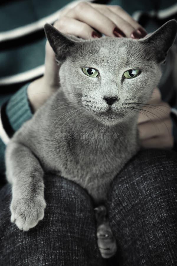 Download Wild cat stock image. Image of domestic, male, love, feline - 18173977