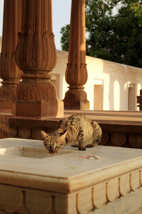 Wild Cat Stock Photo