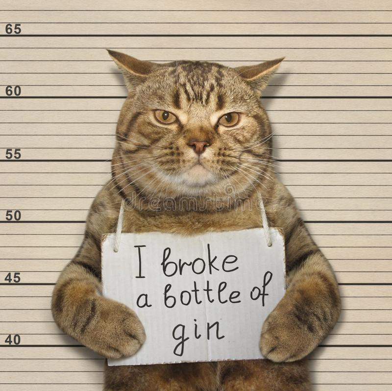 Bad cat broke a bottle of gin. The wild cat broke a bottle of expensive gin. He was arrested for it royalty free stock photos