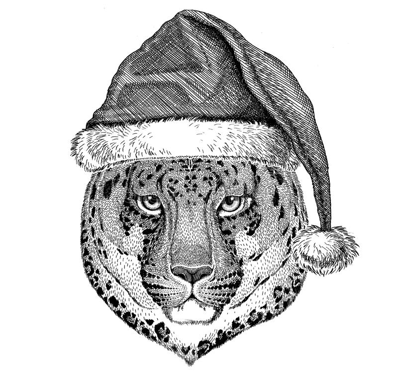 Wild cat Leopard Cat-o`-mountain Panther wearing christmas hat New year eve Merry christmas and happy new year Zoo life. Wild animal wearing christmas hat New vector illustration