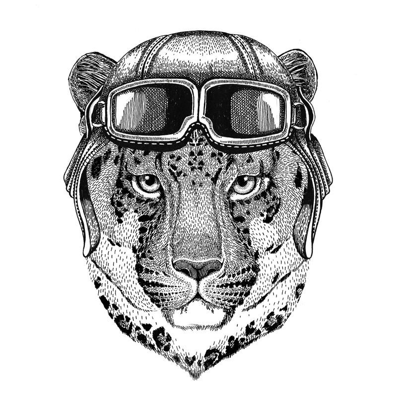 Wild cat Leopard Cat-o`-mountain Panther wearing leather helmet Aviator, biker, motorcycle Hand drawn illustration for royalty free illustration