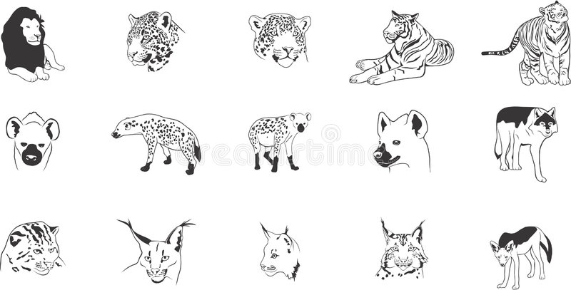 Wild cats illustrations. Collection of illustrations depicting various wild cats such as lions, lynxes, tigers, hyenas etc stock illustration