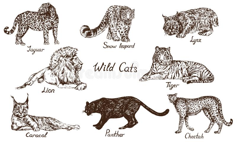 Wild cats set: Jaguar, Snow Leopard ounce, Lynx bobcat, Lion, Tiger, Caracal rooikat, Persian lynx, Black panther, Cheetah stock illustration