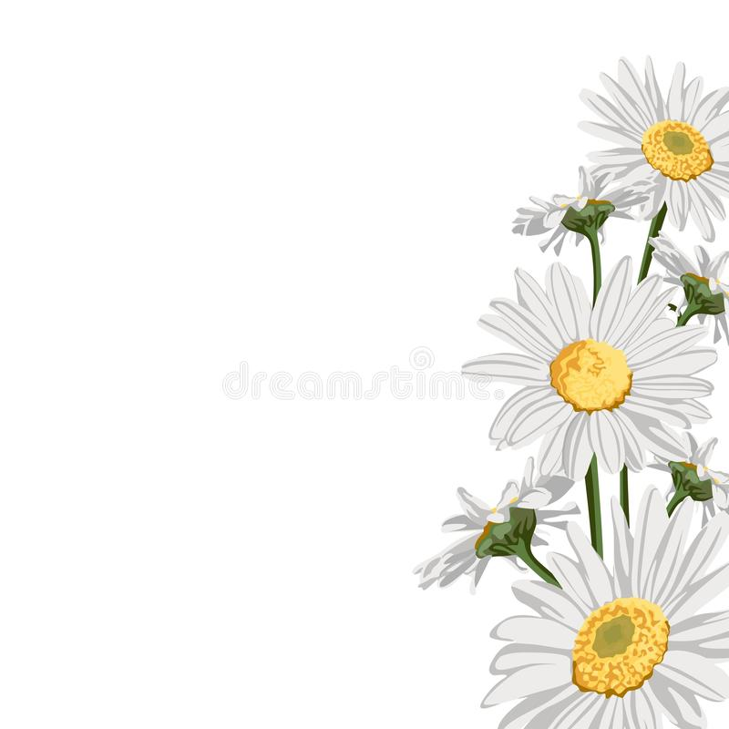 Wild chamomile camomile flowers elegant card. A spring decorative bouquet. Small floral garland. Vector illustration stock illustration