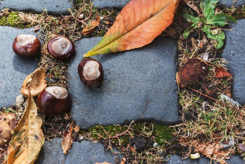 Wild chestnuts, on cobblestone street, eurpe royalty free stock photo