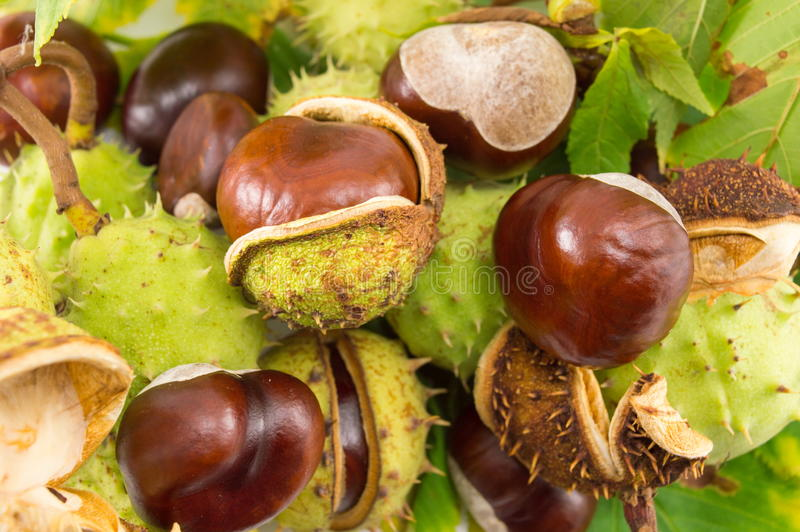 Wild chestnuts on a pile royalty free stock photos