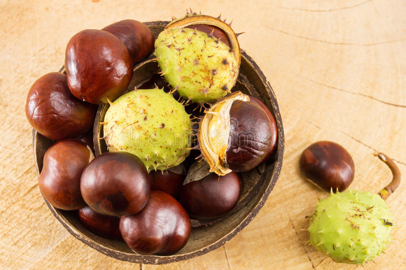 Wild chestnuts with shells in coconut bowl royalty free stock photo
