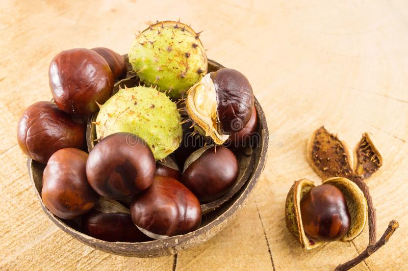 Wild chestnuts with shells in coconut bowl stock image