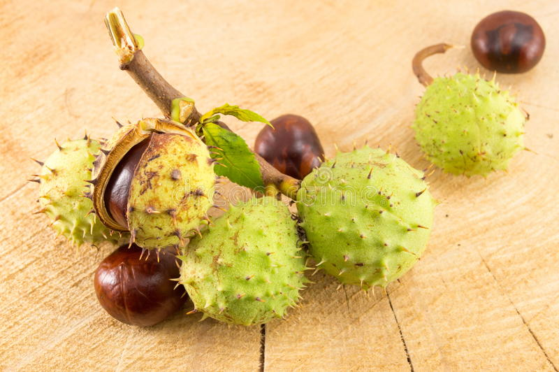 Wild chestnuts on a wooden background royalty free stock photo