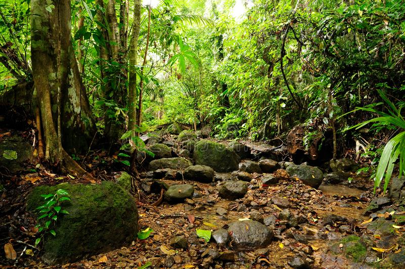Wild Colombian Darien jungle. Colombia, footpath through wild Darien jungle of the Caribbean sea near Capurgana resort and Panama border. Central America royalty free stock photo