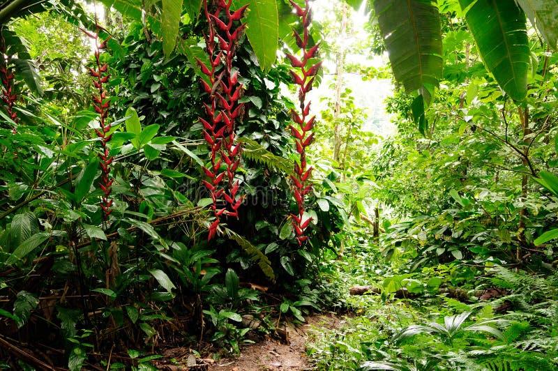 Wild Colombian Darien jungle. Colombia, footpath through wild Darien jungle of the Caribbean sea near Capurgana resort and Panama border. Central America stock photos