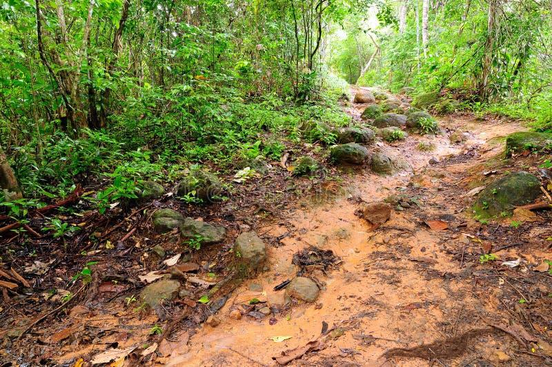 Wild Colombian Darien jungle. Colombia, mud footpath through wild Darien jungle of the Caribbean sea near Capurgana resort and Panama border. Central America stock photos