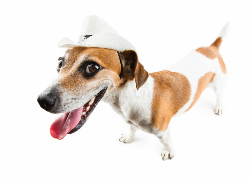Wild cool dog stock photo