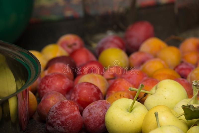 Wild Crab Apples and Plums For Jelly Close Up Detail royalty free stock image