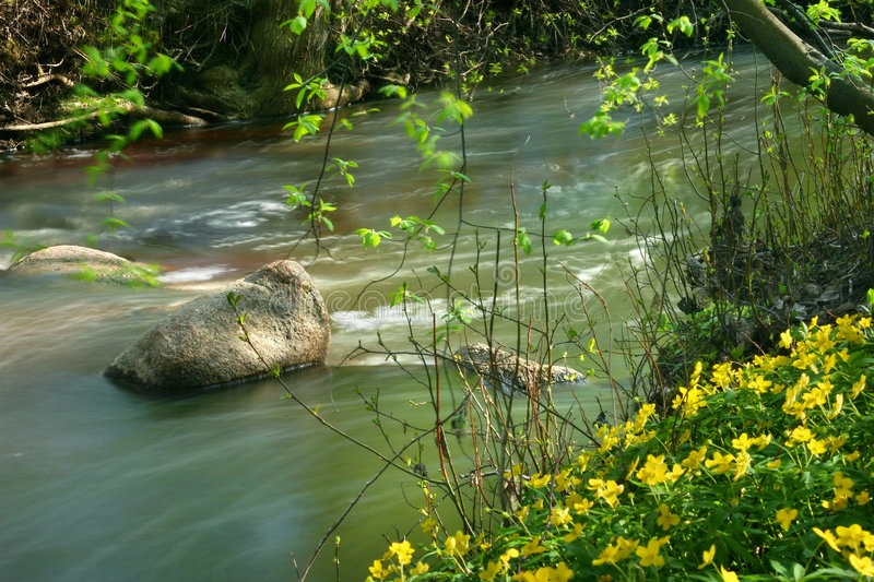 Download Wild creek stock image. Image of nature, grass, flower - 1003941
