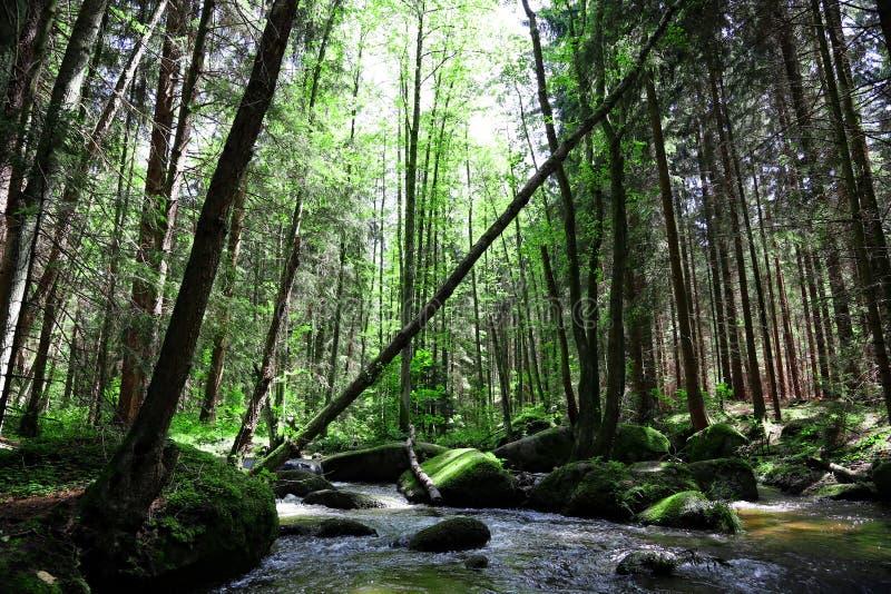 Download Wild creek stock image. Image of flora, creek, leaf, motion - 31625309