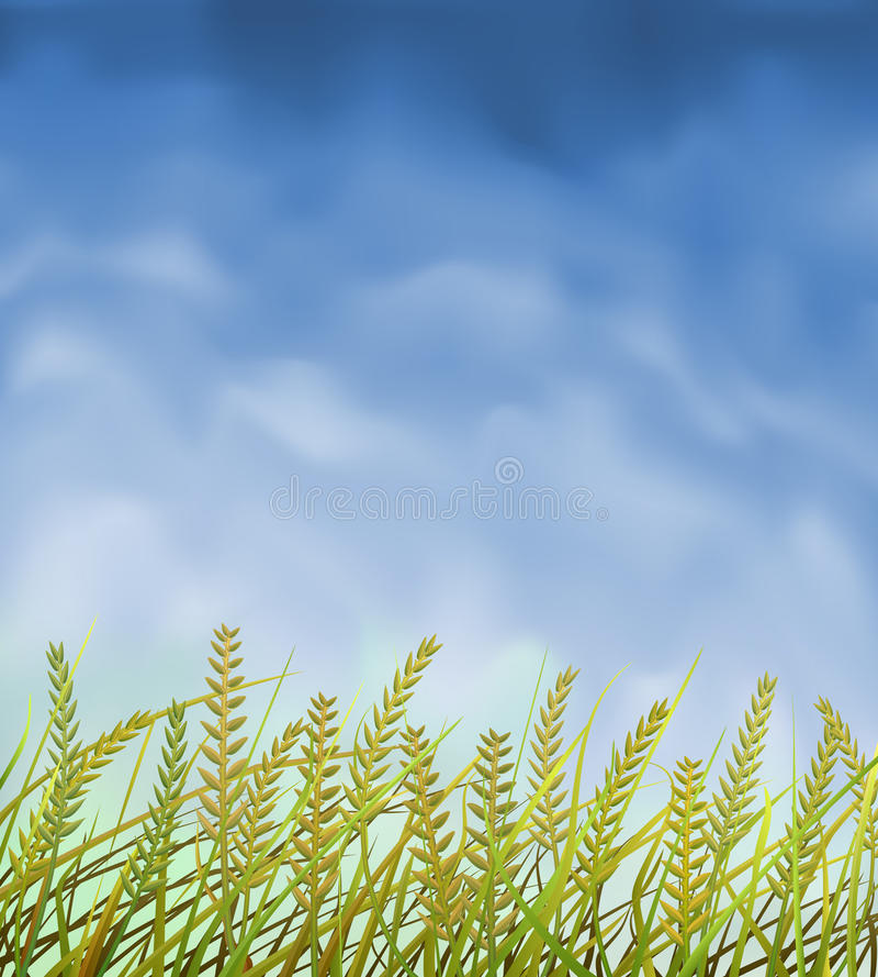 Wild crops field. Under blue sky vector illustration