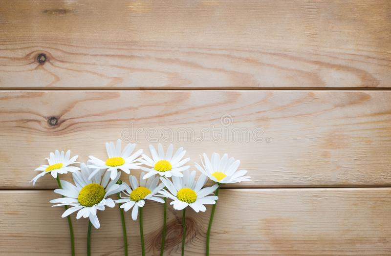 Wild daisies on a wooden background stock image