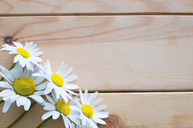 Wild daisies on a wooden background stock photography