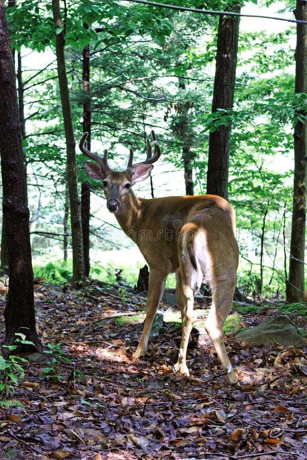 Free Wild Deer Stock Image - 5961541