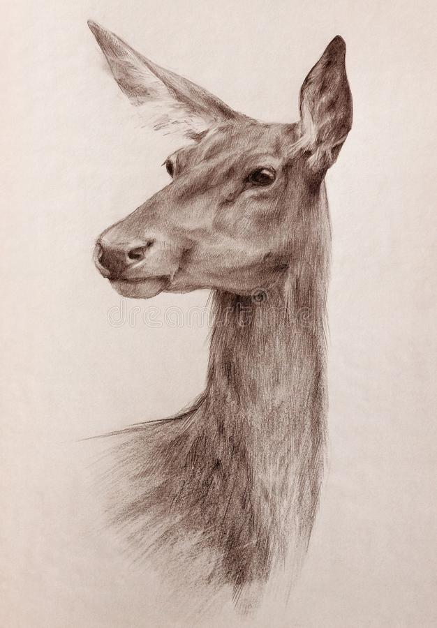 Wild deer head sepia toned pencil drawing. Elegant watchful deer head portrait - graphite pencil sepia toned hand drawing on textured paper royalty free illustration