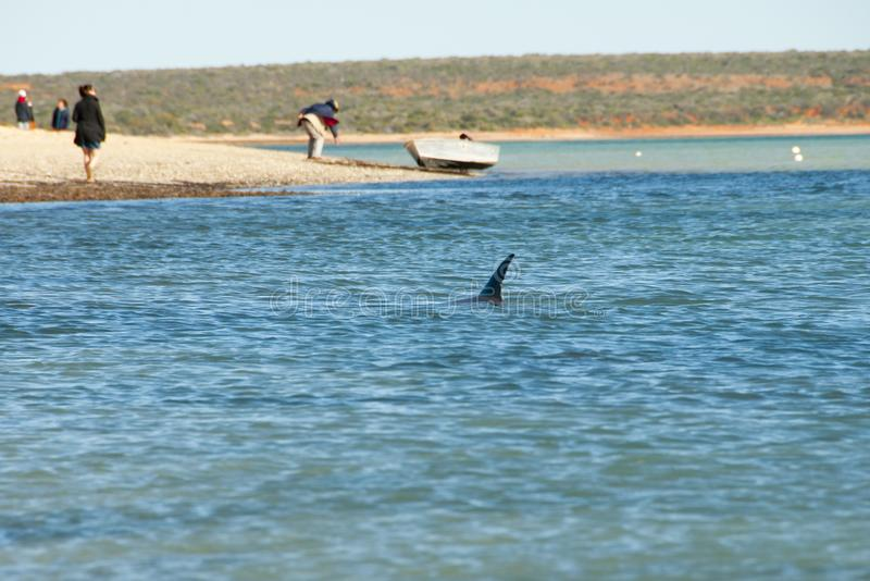 wild delfin royaltyfri bild