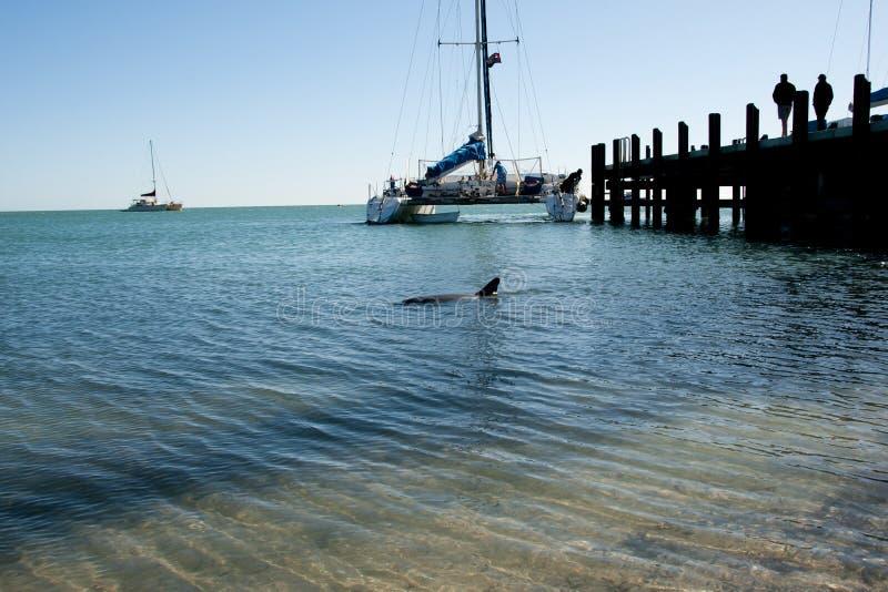 wild delfin arkivfoto