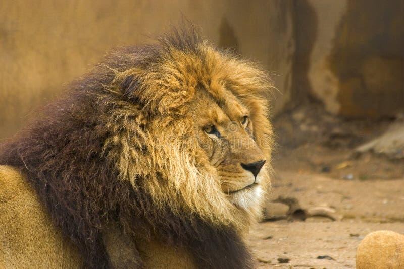 Download Wild djur fotografering för bildbyråer. Bild av vitt, angus - 514557