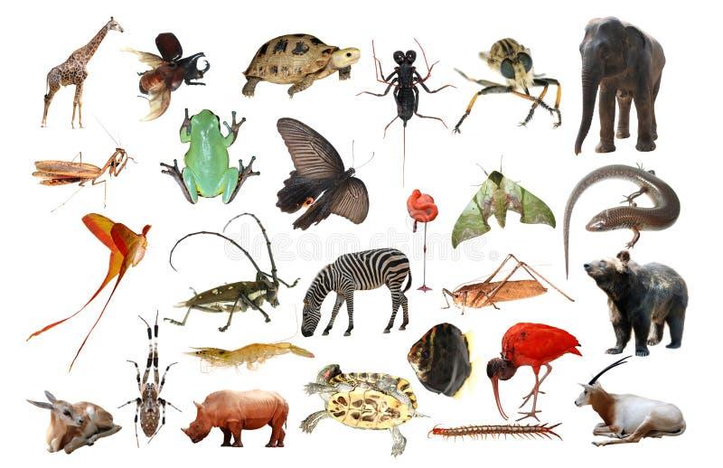 wild djur samling stock illustrationer
