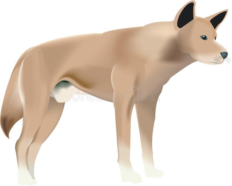 Wild dog. Illustration of an isolated wild dog