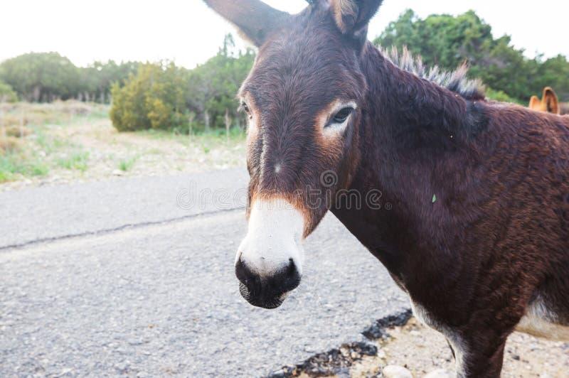 Wild donkey stock images
