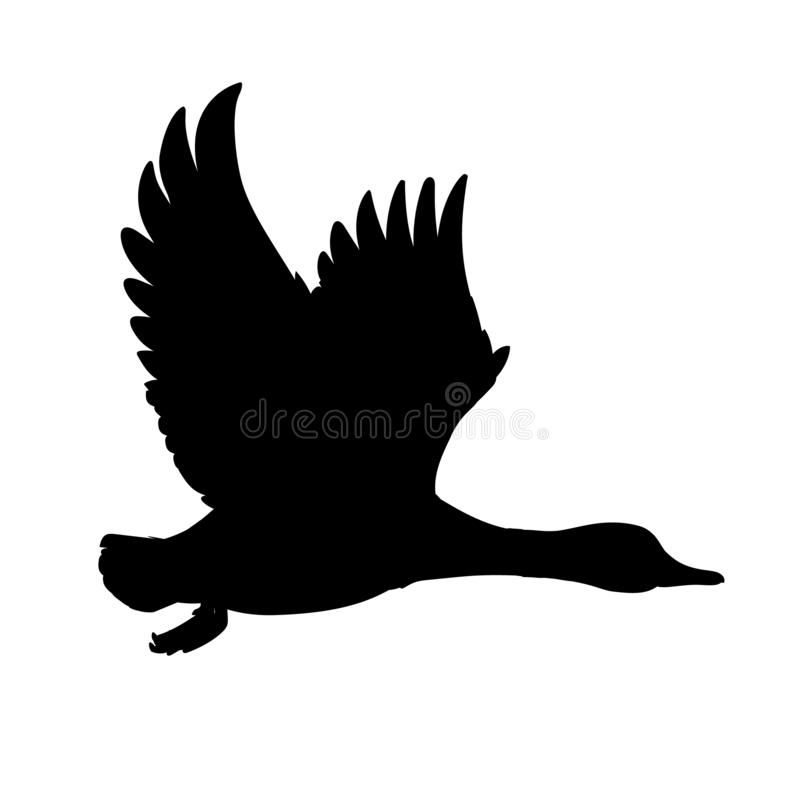 Free Wild Duck Flying. Drake. Vector Illustration Of Black Silhouette Of Bird Mallard Isolated On A White Background For Your Royalty Free Stock Photos - 152624958