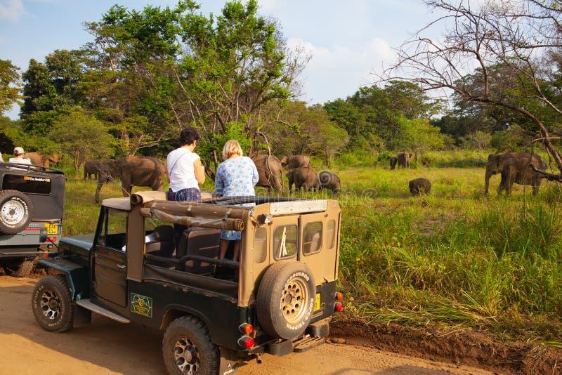 Wild elephants eating grass, Hurulu Eco Park, Sri Lanka stock images